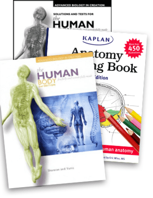 Anatomy - Advanced Biology